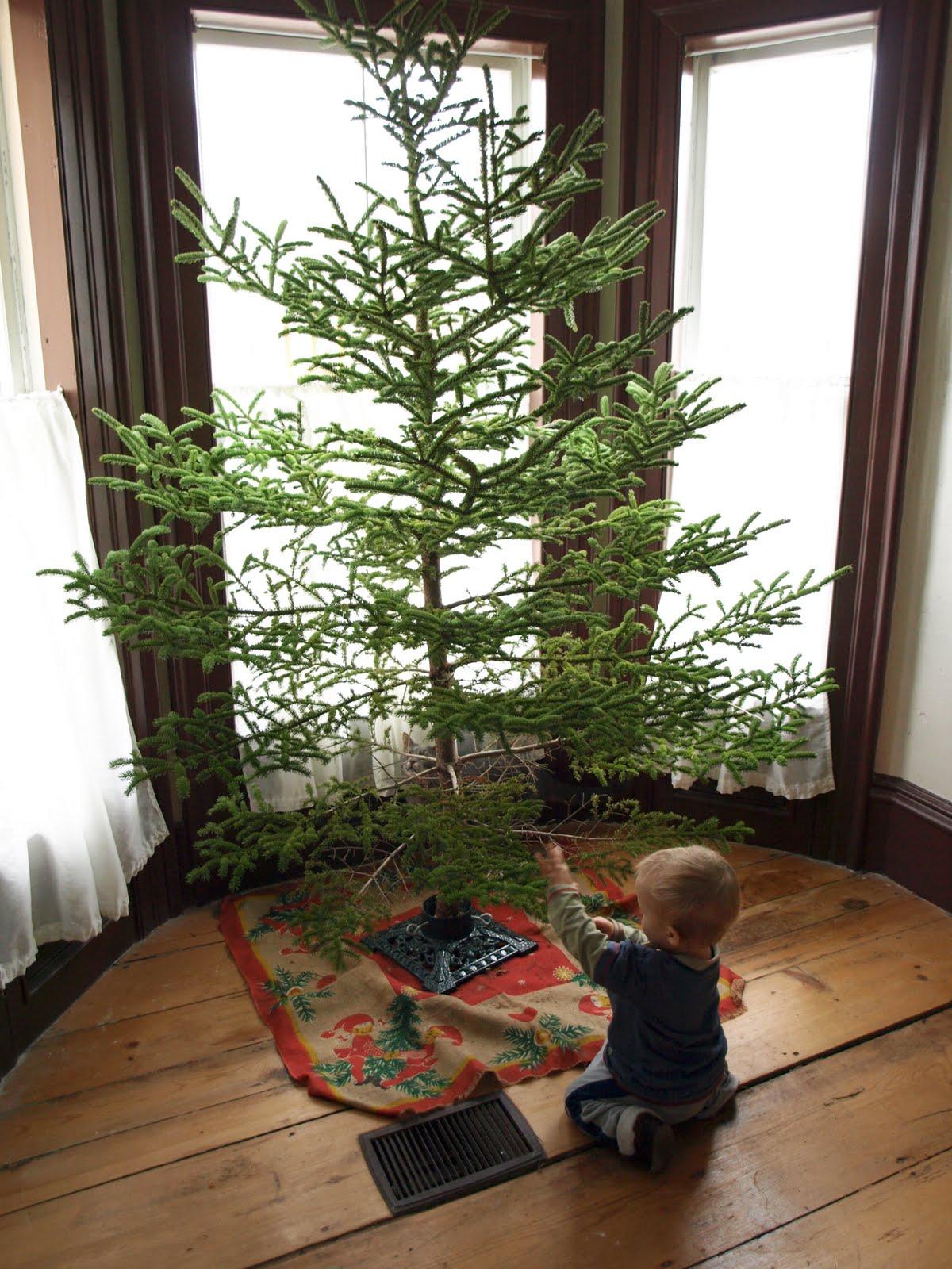 Charlie Brown Oh Christmas Tree
