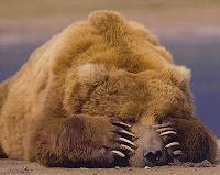 Resultado de imagem para hibernação