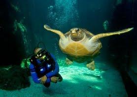 Um aquario incrivel em Cape Town