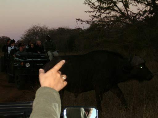 Safari, Sobre ver os big five e outros animais na Africa