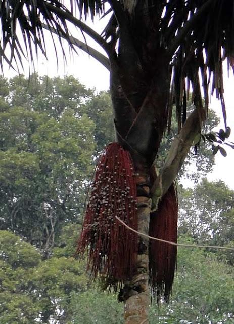 Nascer do dia na Amazonia: um lindo passeio de canoa