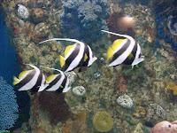 Aquarium exhibit at Riverbanks Zoo