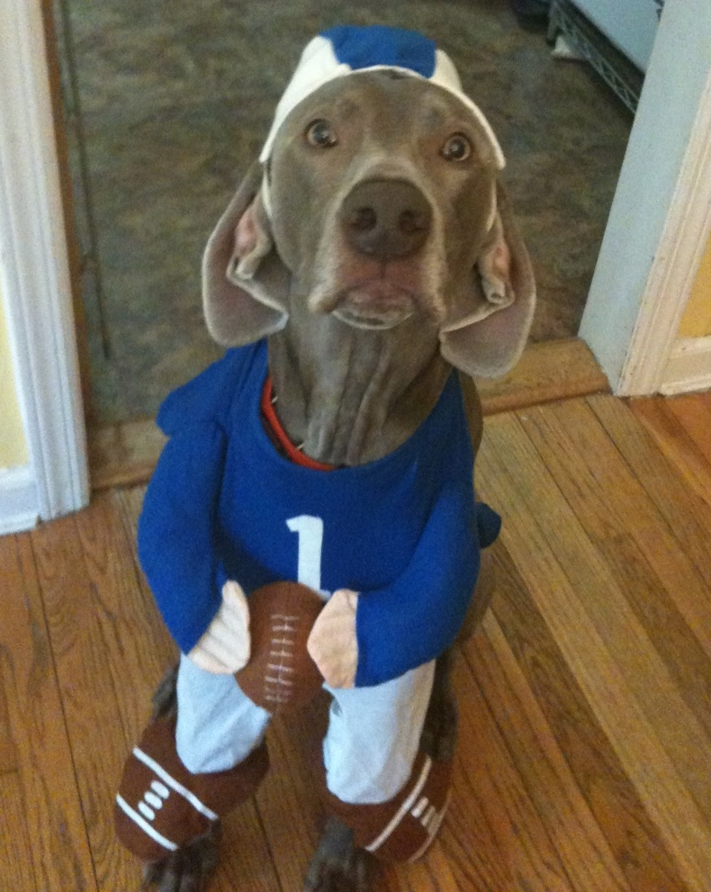 Weimaraner Halloween Costumes Keyword Data Related Weimaraner