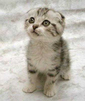 cute+cat