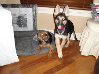 Devil dogs two