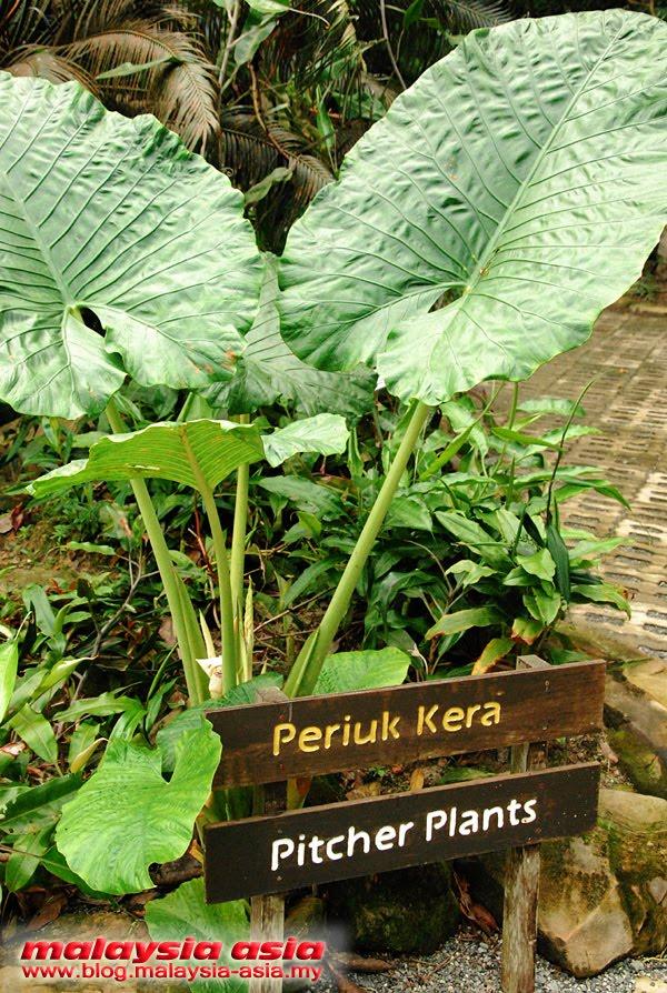Pitcher Plant Garden