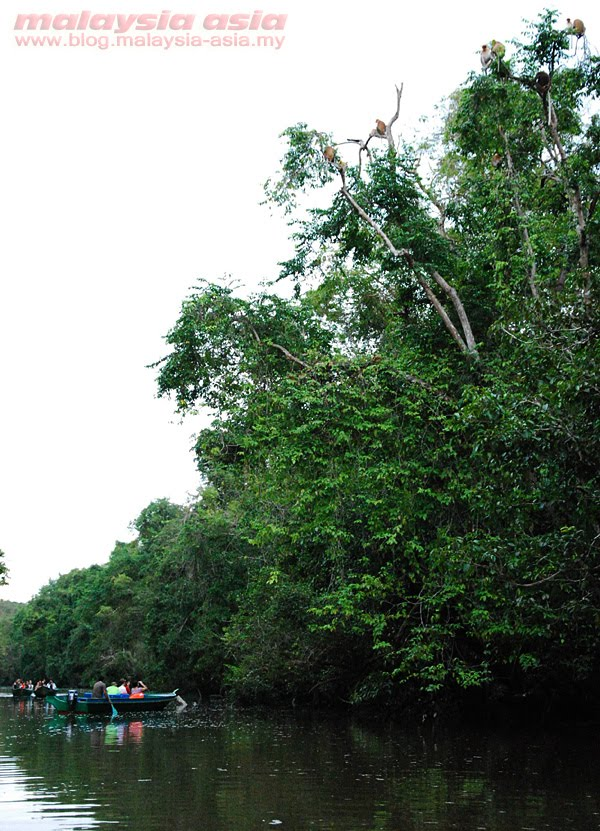 Tours of Kinabatangan River