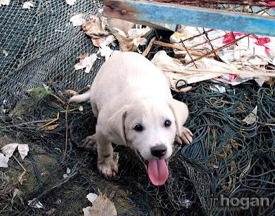 Malaysia cute Puppy