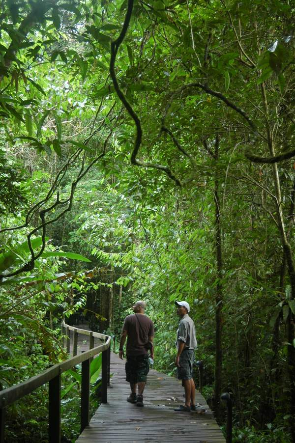 Exploring the Mulu National Park