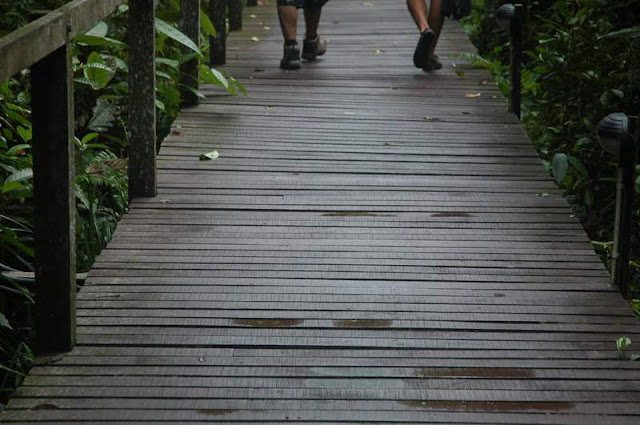 Wooden Walkway Mulu National Park