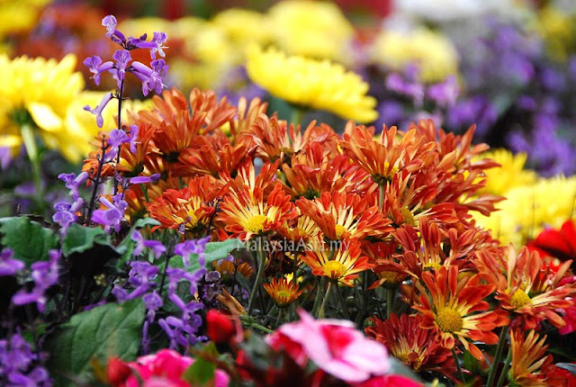 Malaysia Flower and Garden Festival