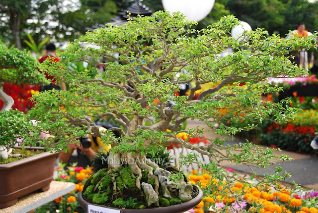 Bonsai Putrajaya Flower and Garden Festival
