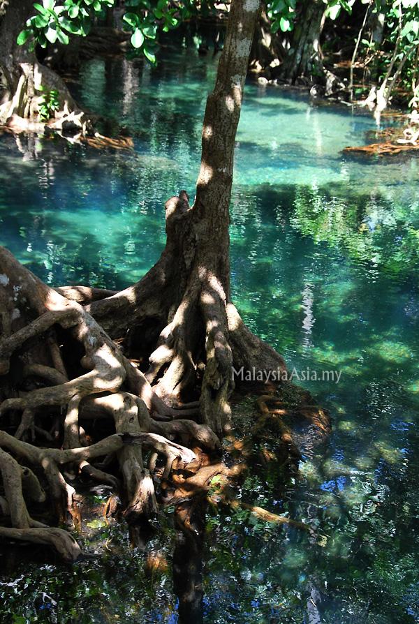 Krabi Tha Pom Nature Trail