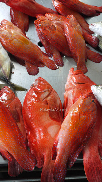 Sandakan Red Grouper