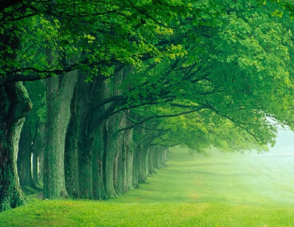 nature trees line tree cool spring natural desktop