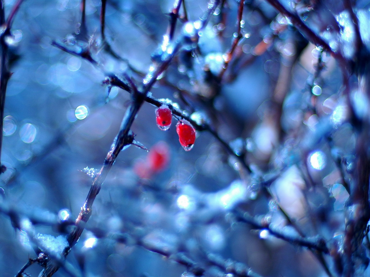 Cold After Rain Nature Photography Wallpaper