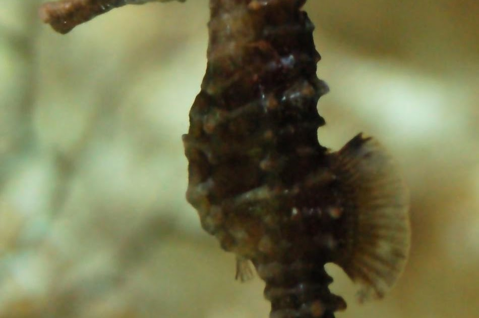 A Light In The Darkness Symbolic Meaning Of The Seahorse