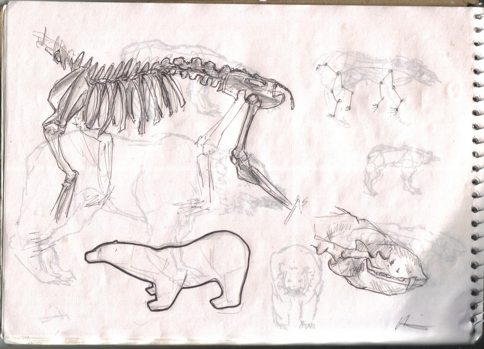 bear skull diagram fender n3 wiring wallpaper anatomy human