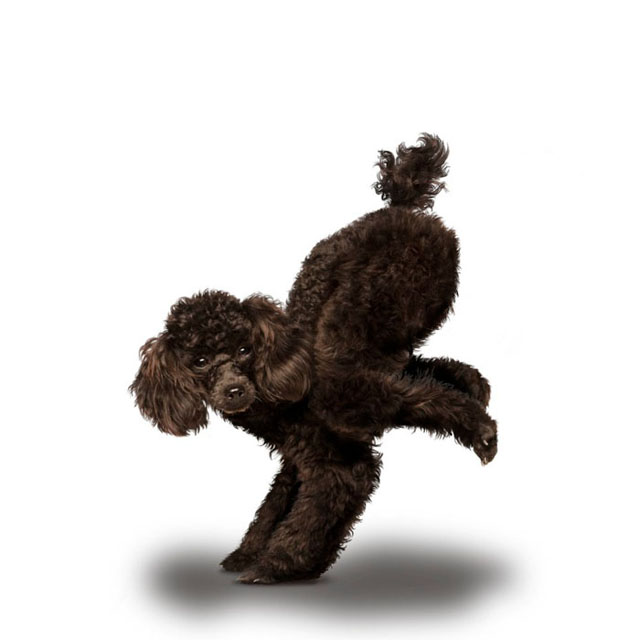 Yoga de cachorros