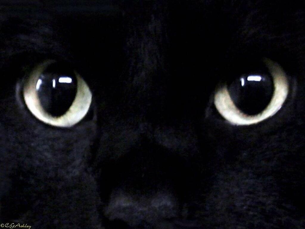 About black noire