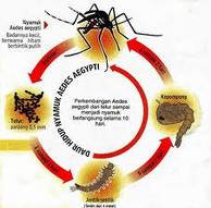 Identify differences in typhoid and dengue fever since the ...
