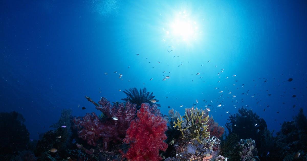 Best 3d Wallpapers For Iphone Best Wallpapers Underwater Landscape Wallpapers