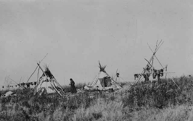 Minnsota Buffalo Hunt - Butchering