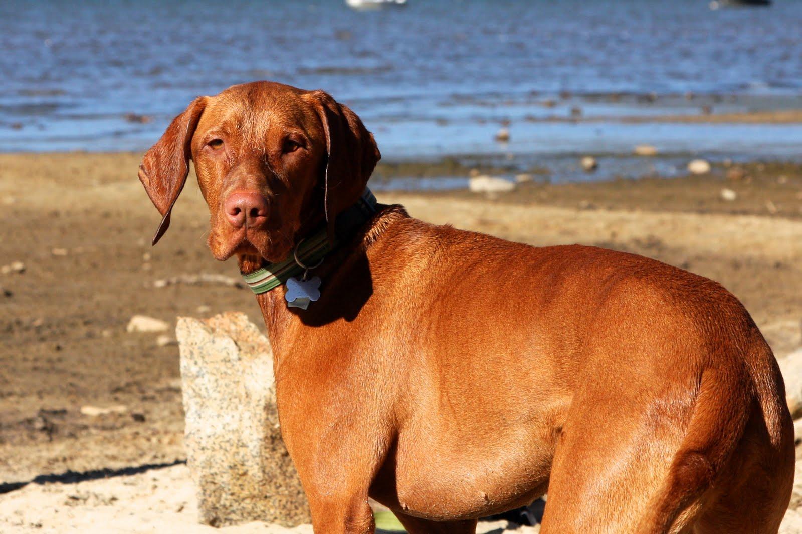 Regan Beach Dog Friendly