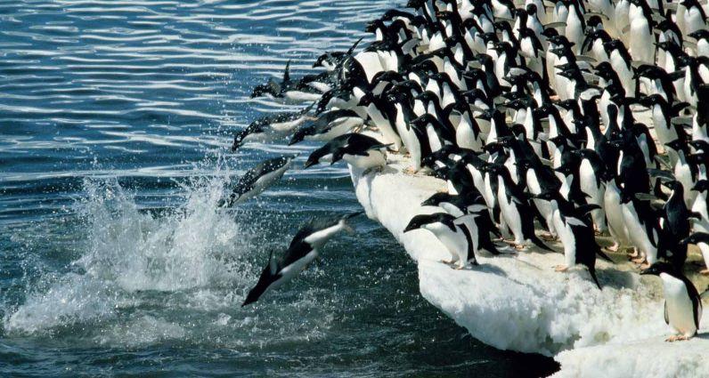 Turismo Ecológico na Antártica