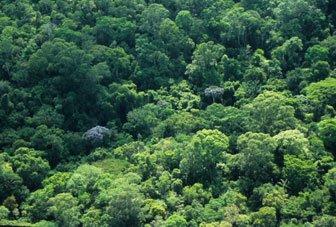 Biodiversidade da Zona Costeira e Marinha do Brasil