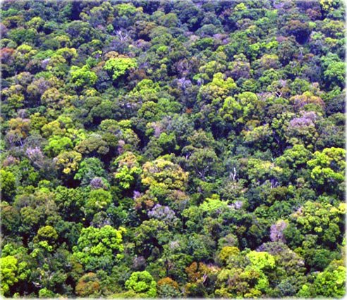 Amazônia | Maior Bioma Terrestre do Planeta