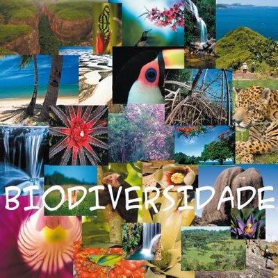 Evolução do Conceito de Biodiversidade