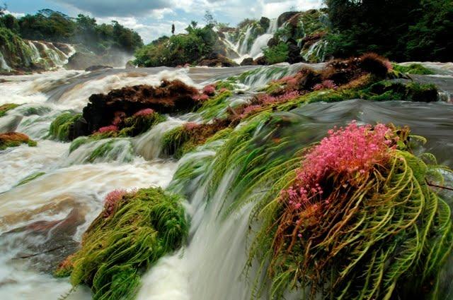 Parque Nacional das Montanhas do Tumucumaque | AP/PA