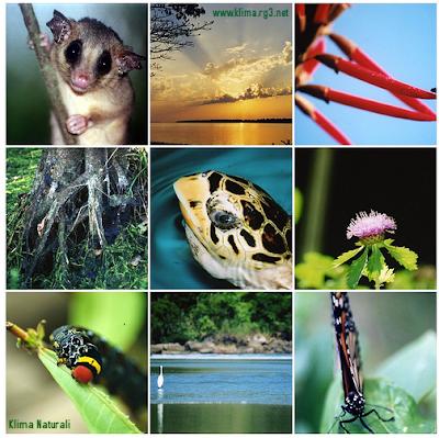 O Brasil e a Convenção Sobre a Diversidade Biológica