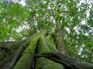 Parque Estadual Nhamundá - AM
