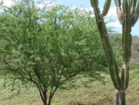Floresta Nacional de Sobral | Ceará