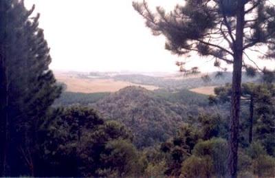 Floresta Nacional de São Francisco de Paula - RS