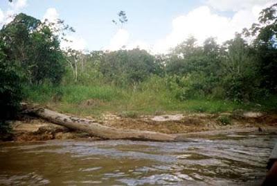 Floresta Nacional de Mapiá-Inauni | Amazonas