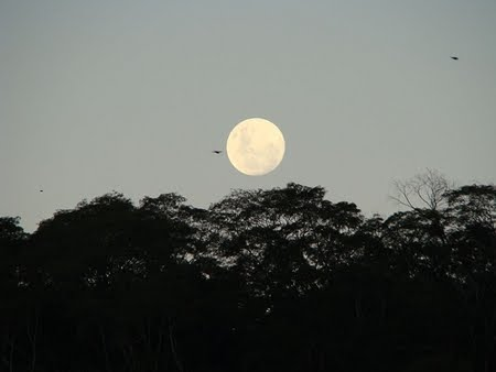 Floresta Nacional de Mário Xavier | Rio de Janeiro