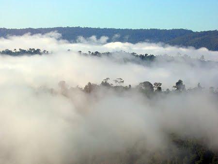 Floresta Nacional de Altamira | Pará