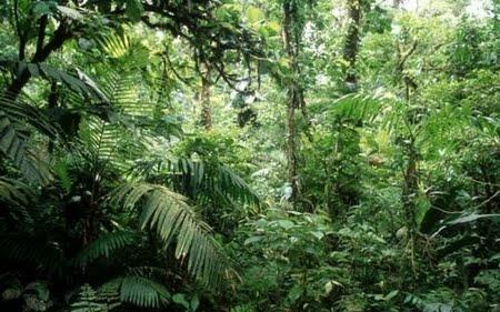 Floresta Equatorial de Terra Firme