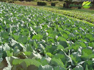 #Agroecologia e Sustentabilidade