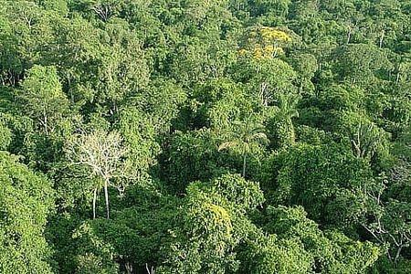 Floresta Nacional de Itaituba I | Pará