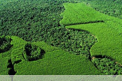 Floresta Nacional de Capão Bonito | São Paulo