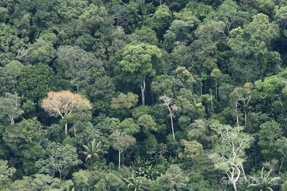 Floresta Estadual de Cajuru