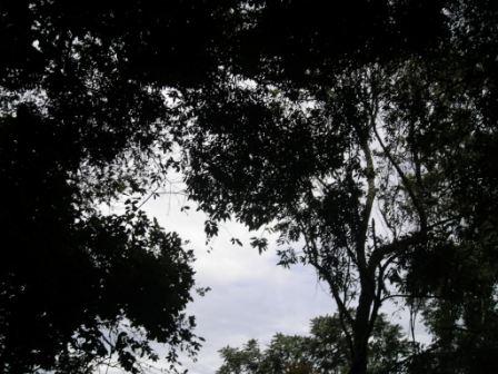 Floresta Estadual de Pederneiras