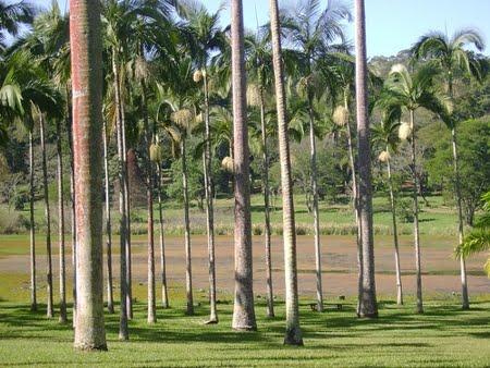 Floresta Estadual de Edmundo Navarro de Andrade