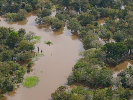 Reserva Biológica do Abufari | Amazonas
