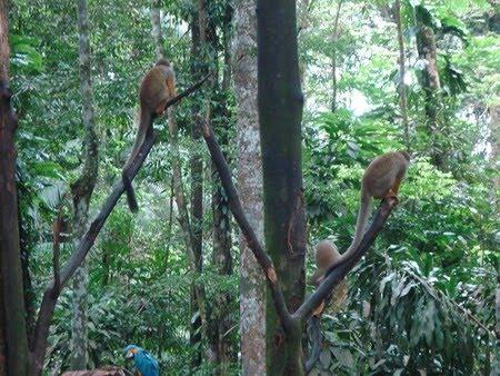 Estação Ecológica Niquiá | Roraima