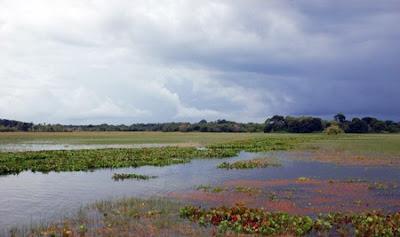 Área de Proteção Ambiental de Curiaú | Amapá